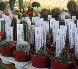 Бирка-колышек для растений Eti-Pet 104 мм х 18 мм /1000 шт